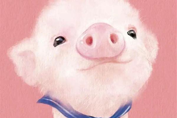 属猪的几月出生最好 属猪人的性格是怎样的