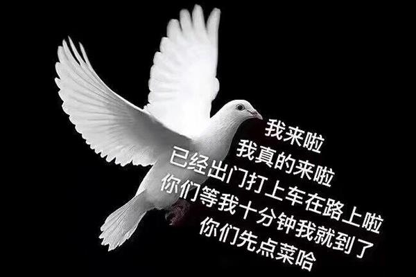 人类的本质是鸽子还是复读机 人类的本质是鸽子什么梗